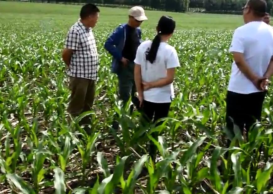 长春市农机推广总站在九台检查保护性耕作